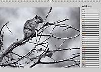 Afrikas Tierwelt in schwarz & weiss (Wandkalender 2019 DIN A2 quer) - Produktdetailbild 4