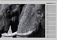 Afrikas Tierwelt in schwarz & weiss (Wandkalender 2019 DIN A2 quer) - Produktdetailbild 9