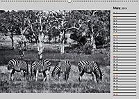 Afrikas Tierwelt in schwarz & weiss (Wandkalender 2019 DIN A2 quer) - Produktdetailbild 3