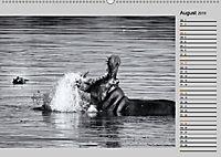 Afrikas Tierwelt in schwarz & weiss (Wandkalender 2019 DIN A2 quer) - Produktdetailbild 8