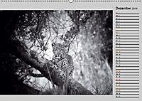 Afrikas Tierwelt in schwarz & weiss (Wandkalender 2019 DIN A2 quer) - Produktdetailbild 12