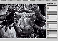 Afrikas Tierwelt in schwarz & weiss (Wandkalender 2019 DIN A2 quer) - Produktdetailbild 11