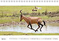 AFRIKAS TIERWELT Panorama Impressionen (Tischkalender 2019 DIN A5 quer) - Produktdetailbild 4