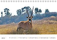 AFRIKAS TIERWELT Panorama Impressionen (Tischkalender 2019 DIN A5 quer) - Produktdetailbild 7