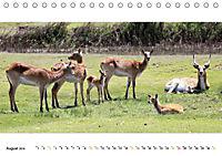 AFRIKAS TIERWELT Panorama Impressionen (Tischkalender 2019 DIN A5 quer) - Produktdetailbild 8