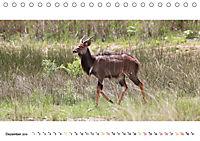AFRIKAS TIERWELT Panorama Impressionen (Tischkalender 2019 DIN A5 quer) - Produktdetailbild 12