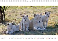 AFRIKAS TIERWELT Panorama Impressionen (Wandkalender 2019 DIN A4 quer) - Produktdetailbild 5
