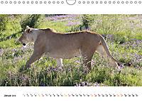 AFRIKAS TIERWELT Panorama Impressionen (Wandkalender 2019 DIN A4 quer) - Produktdetailbild 1