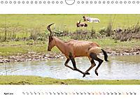AFRIKAS TIERWELT Panorama Impressionen (Wandkalender 2019 DIN A4 quer) - Produktdetailbild 4
