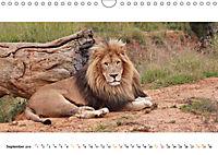 AFRIKAS TIERWELT Panorama Impressionen (Wandkalender 2019 DIN A4 quer) - Produktdetailbild 9
