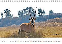 AFRIKAS TIERWELT Panorama Impressionen (Wandkalender 2019 DIN A4 quer) - Produktdetailbild 7