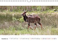 AFRIKAS TIERWELT Panorama Impressionen (Wandkalender 2019 DIN A4 quer) - Produktdetailbild 12