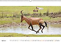 AFRIKAS TIERWELT Panorama Impressionen (Wandkalender 2019 DIN A3 quer) - Produktdetailbild 4