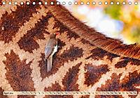 Afrikas Vogelwelt 2019 (Tischkalender 2019 DIN A5 quer) - Produktdetailbild 4