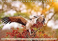 Afrikas Vogelwelt 2019 (Tischkalender 2019 DIN A5 quer) - Produktdetailbild 2