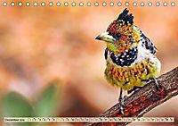 Afrikas Vogelwelt 2019 (Tischkalender 2019 DIN A5 quer) - Produktdetailbild 12