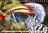 Afrikas Vogelwelt 2019 (Tischkalender 2019 DIN A5 quer) - Produktdetailbild 3