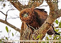 Afrikas Vogelwelt 2019 (Tischkalender 2019 DIN A5 quer) - Produktdetailbild 9