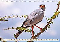 Afrikas Vogelwelt 2019 (Tischkalender 2019 DIN A5 quer) - Produktdetailbild 10