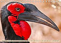 Afrikas Vogelwelt 2019 (Tischkalender 2019 DIN A5 quer) - Produktdetailbild 1