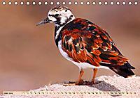 Afrikas Vogelwelt 2019 (Tischkalender 2019 DIN A5 quer) - Produktdetailbild 6