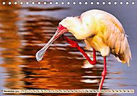 Afrikas Vogelwelt 2019 (Tischkalender 2019 DIN A5 quer) - Produktdetailbild 11