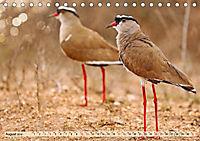 Afrikas Vogelwelt 2019 (Tischkalender 2019 DIN A5 quer) - Produktdetailbild 8