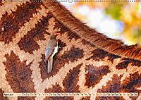 Afrikas Vogelwelt 2019 (Wandkalender 2019 DIN A2 quer) - Produktdetailbild 4
