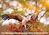 Afrikas Vogelwelt 2019 (Wandkalender 2019 DIN A2 quer) - Produktdetailbild 2