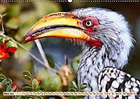 Afrikas Vogelwelt 2019 (Wandkalender 2019 DIN A2 quer) - Produktdetailbild 3