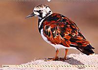 Afrikas Vogelwelt 2019 (Wandkalender 2019 DIN A2 quer) - Produktdetailbild 6