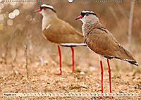 Afrikas Vogelwelt 2019 (Wandkalender 2019 DIN A2 quer) - Produktdetailbild 8