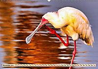 Afrikas Vogelwelt 2019 (Wandkalender 2019 DIN A2 quer) - Produktdetailbild 11