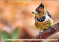 Afrikas Vogelwelt 2019 (Wandkalender 2019 DIN A2 quer) - Produktdetailbild 12