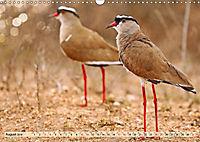 Afrikas Vogelwelt 2019 (Wandkalender 2019 DIN A3 quer) - Produktdetailbild 8