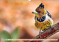 Afrikas Vogelwelt 2019 (Wandkalender 2019 DIN A3 quer) - Produktdetailbild 12