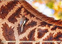 Afrikas Vogelwelt 2019 (Wandkalender 2019 DIN A3 quer) - Produktdetailbild 4