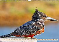 Afrikas Vogelwelt 2019 (Wandkalender 2019 DIN A3 quer) - Produktdetailbild 7