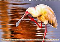 Afrikas Vogelwelt 2019 (Wandkalender 2019 DIN A3 quer) - Produktdetailbild 11