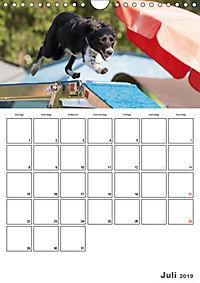 Agility Mecklenburg Vorpommern (Wandkalender 2019 DIN A4 hoch) - Produktdetailbild 7