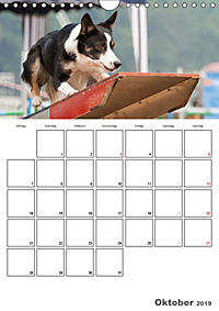 Agility Mecklenburg Vorpommern (Wandkalender 2019 DIN A4 hoch) - Produktdetailbild 10
