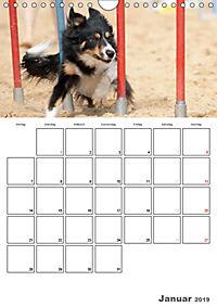 Agility Mecklenburg Vorpommern (Wandkalender 2019 DIN A4 hoch) - Produktdetailbild 1