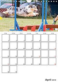 Agility Mecklenburg Vorpommern (Wandkalender 2019 DIN A4 hoch) - Produktdetailbild 4