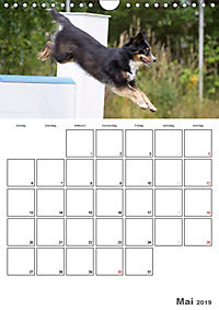 Agility Mecklenburg Vorpommern (Wandkalender 2019 DIN A4 hoch) - Produktdetailbild 5