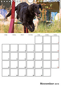 Agility Mecklenburg Vorpommern (Wandkalender 2019 DIN A4 hoch) - Produktdetailbild 11