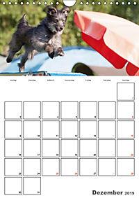 Agility Mecklenburg Vorpommern (Wandkalender 2019 DIN A4 hoch) - Produktdetailbild 12