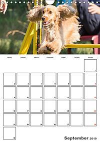 Agility Mecklenburg Vorpommern (Wandkalender 2019 DIN A4 hoch) - Produktdetailbild 9