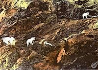 Alaska - Wildnis am Rande der Welt - Produktdetailbild 8