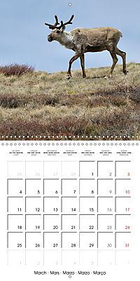 Alaskan Wildlife (Wall Calendar 2019 300 × 300 mm Square) - Produktdetailbild 3