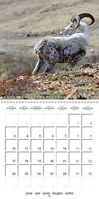 Alaskan Wildlife (Wall Calendar 2019 300 × 300 mm Square) - Produktdetailbild 6